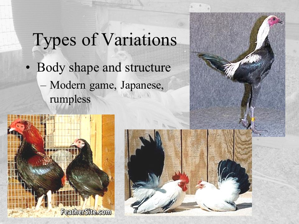 Types of Variations Body shape and structure