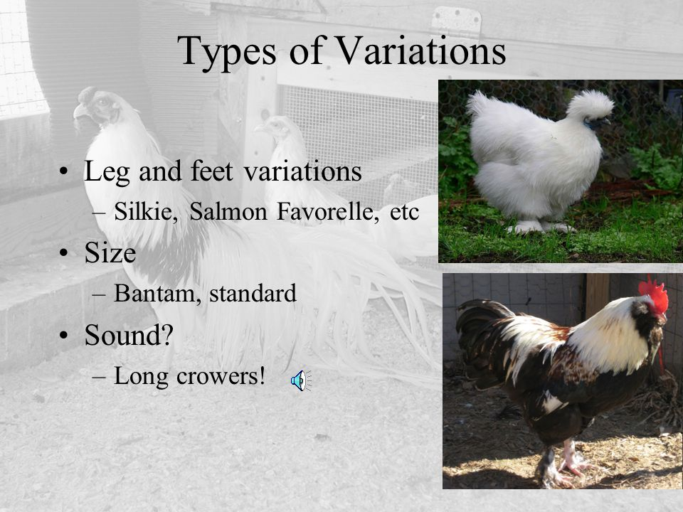 Types of Variations Leg and feet variations Size Sound