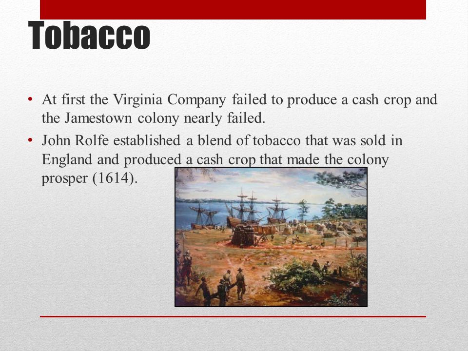 Tobacco At first the Virginia Company failed to produce a cash crop and the Jamestown colony nearly failed.