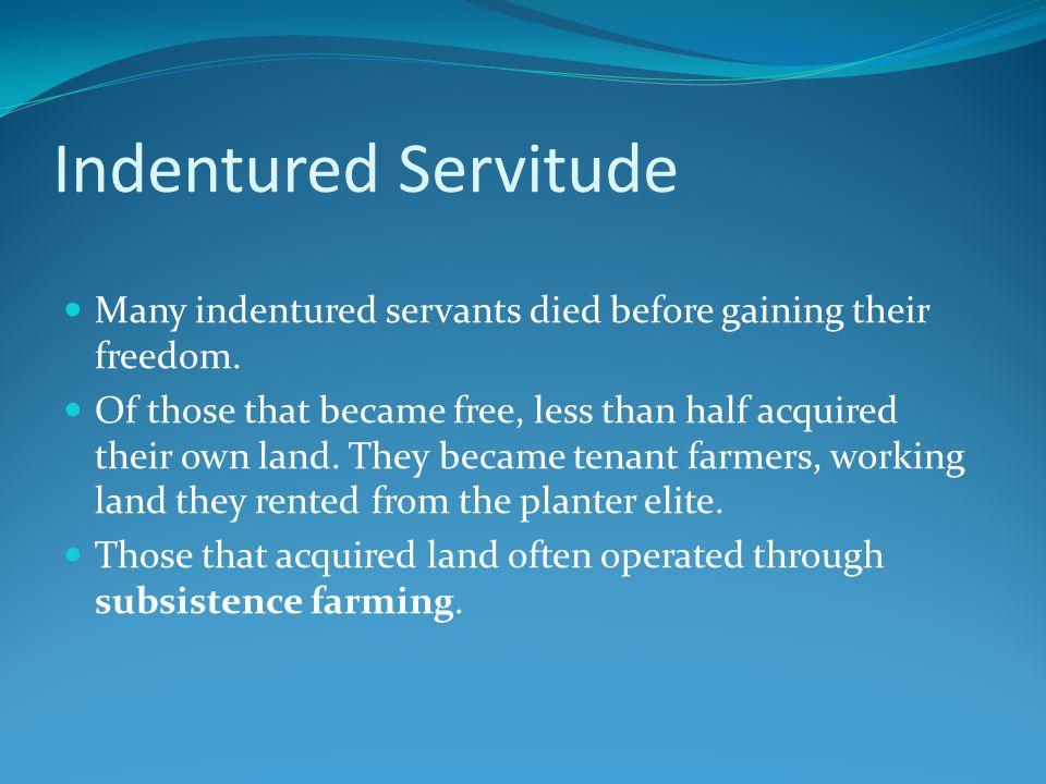 Indentured Servitude Many indentured servants died before gaining their freedom.