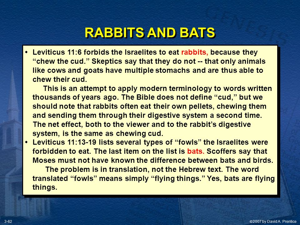 RABBITS AND BATS