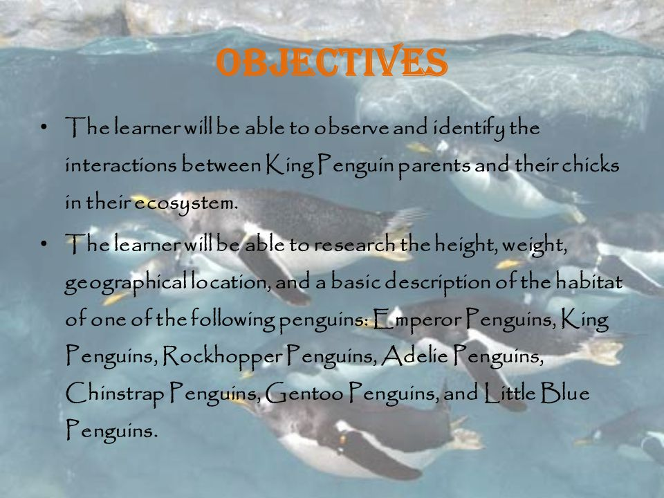 Objectives The learner will be able to observe and identify the interactions between King Penguin parents and their chicks in their ecosystem.