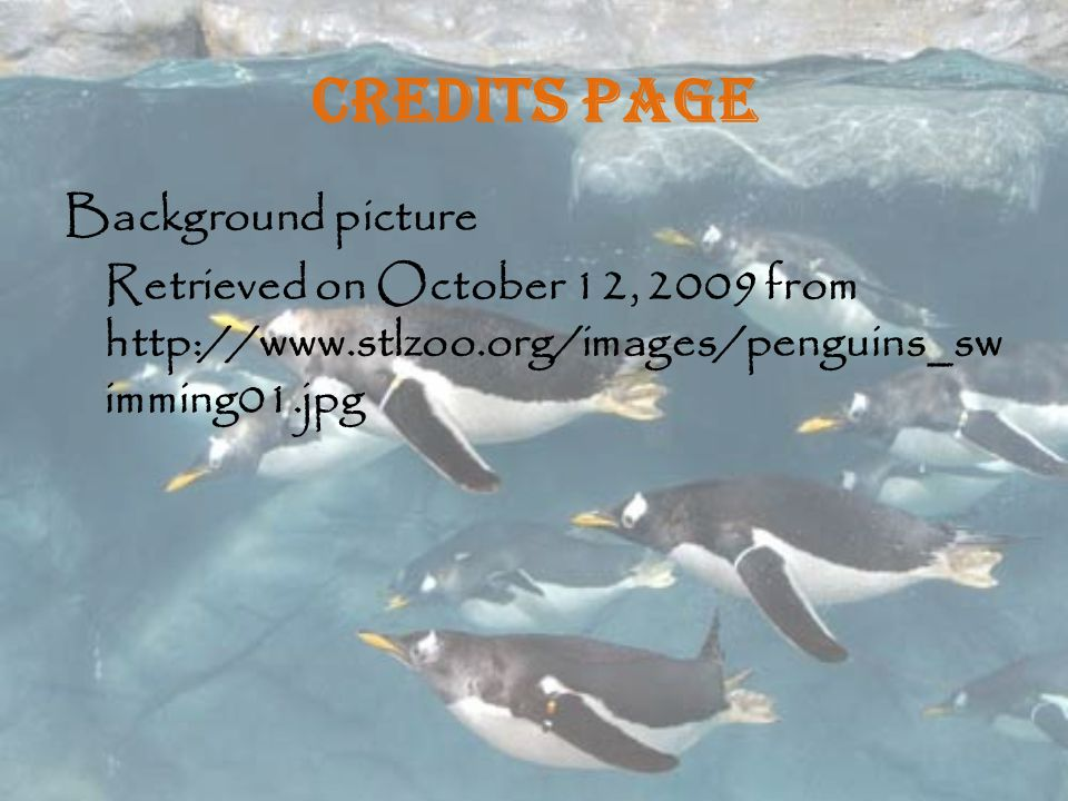Credits Page Background picture Retrieved on October 12, 2009 from http://www.stlzoo.org/images/penguins_swimming01.jpg