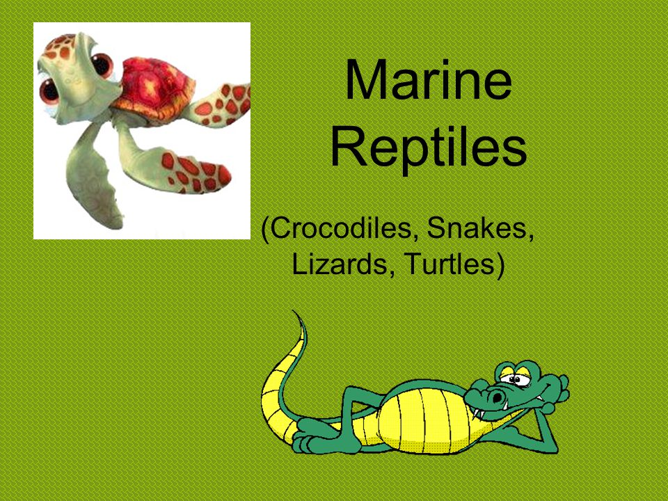 (Crocodiles, Snakes, Lizards, Turtles)
