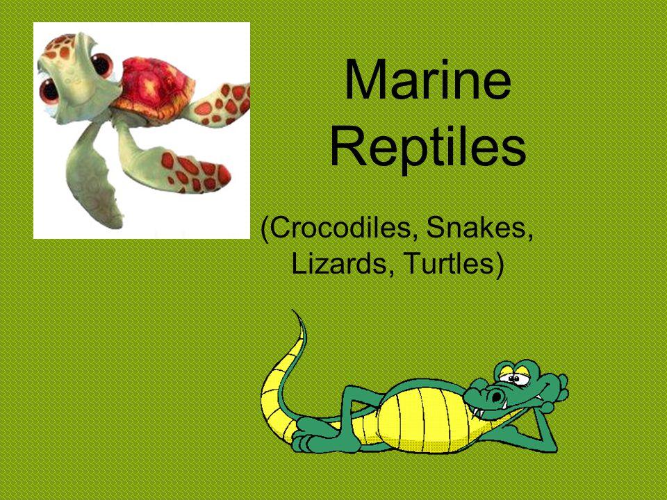 (Crocodiles, Snakes, Lizards, Turtles)