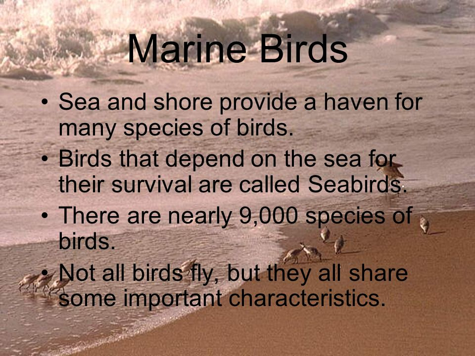 Marine Birds Sea and shore provide a haven for many species of birds.