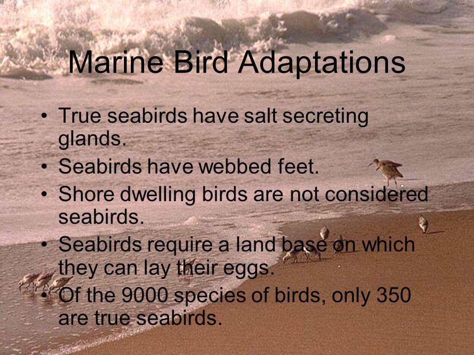 Marine Bird Adaptations