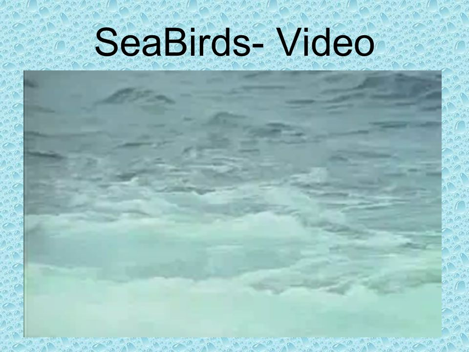 SeaBirds- Video