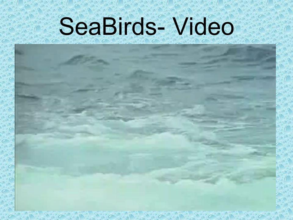 SeaBirds- Video