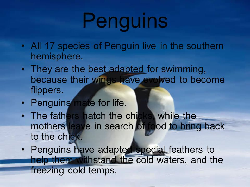 Penguins All 17 species of Penguin live in the southern hemisphere.