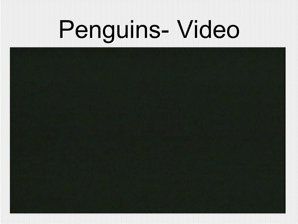 Penguins- Video