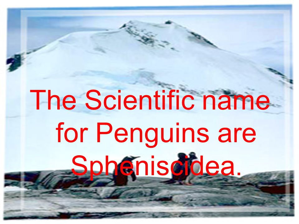 The Scientific name for Penguins are Spheniscidea.