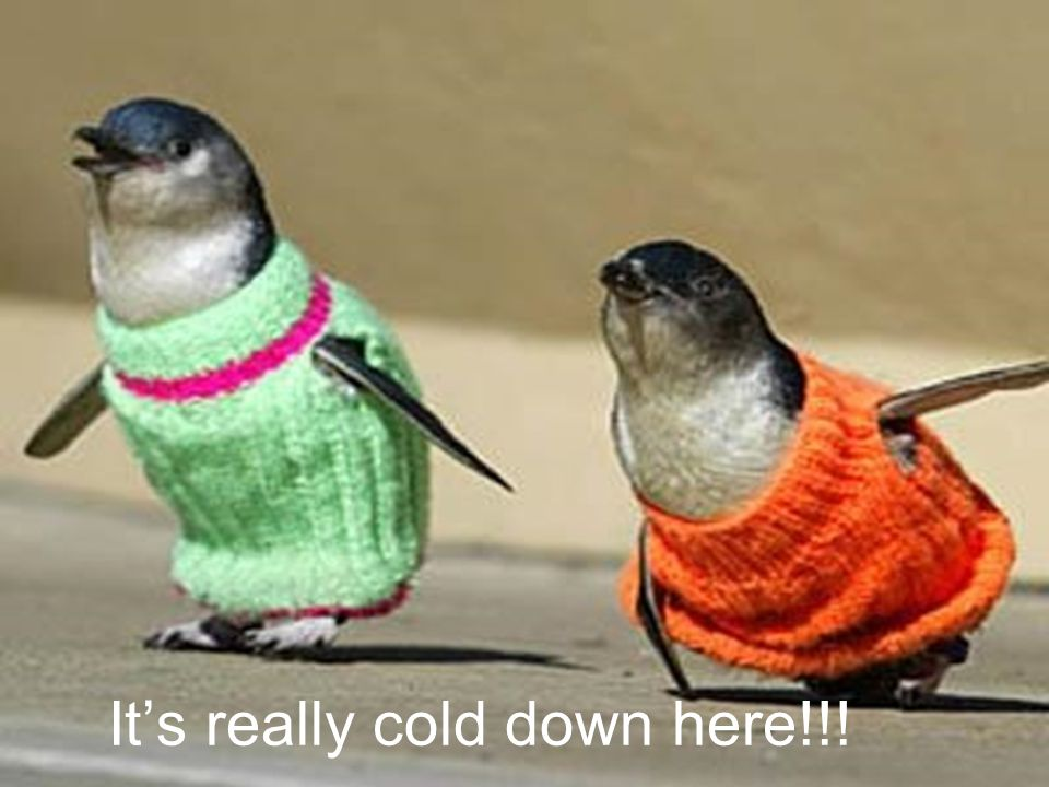 It's really cold down here!!!