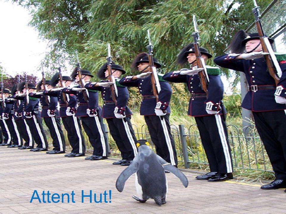 Attent Hut!