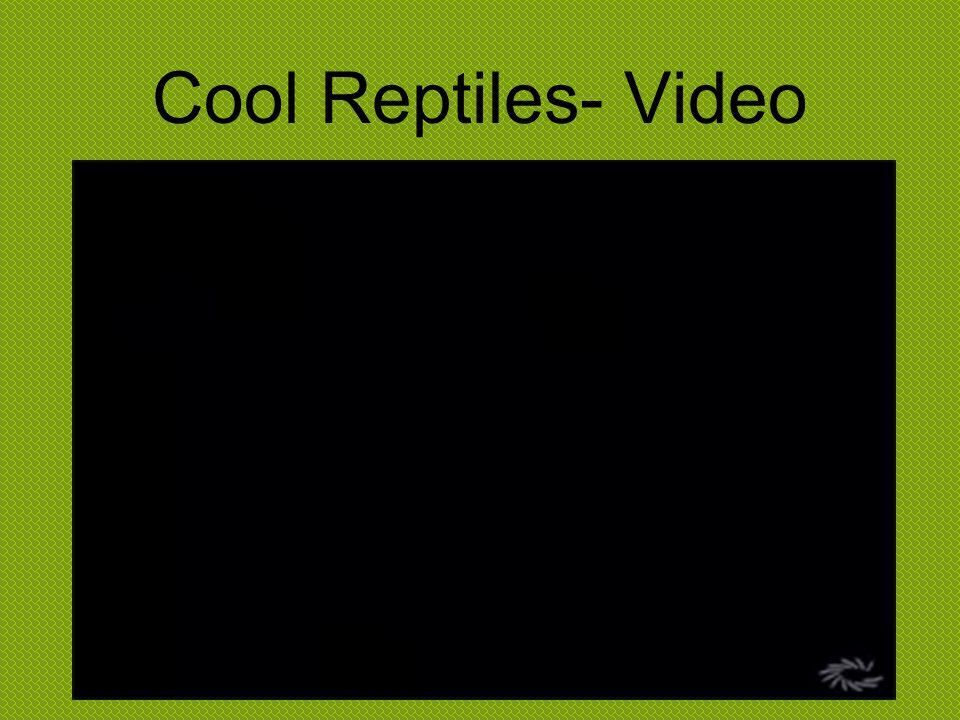 Cool Reptiles- Video