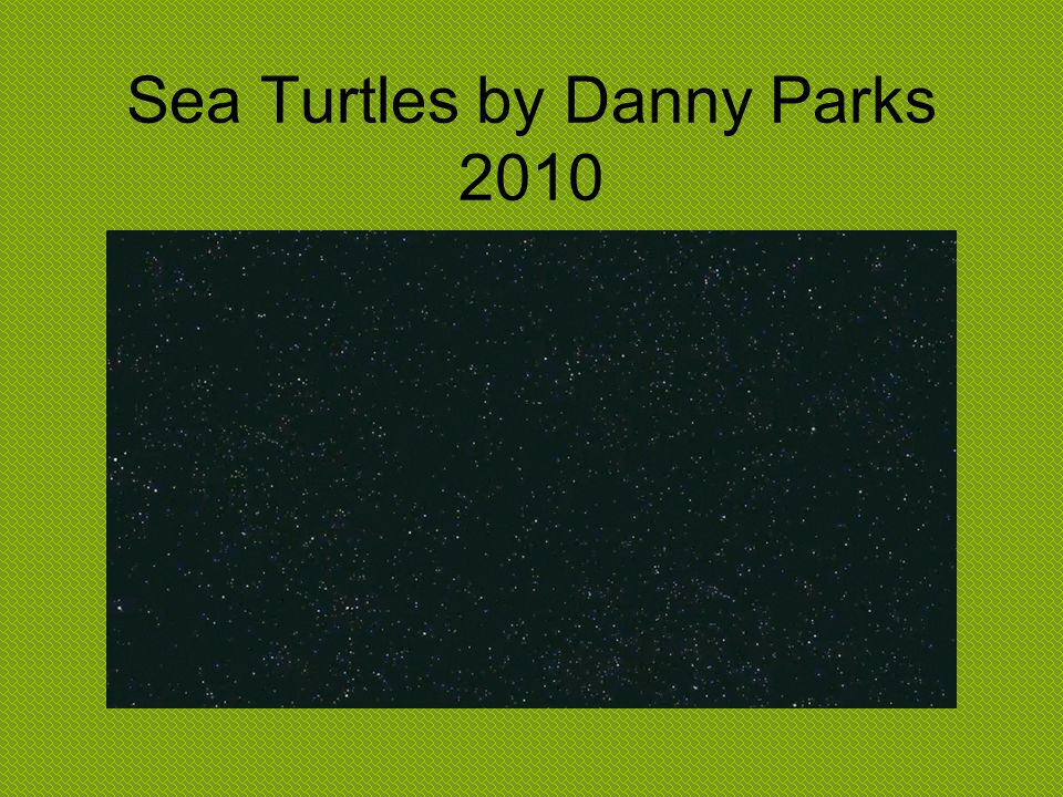 Sea Turtles by Danny Parks 2010