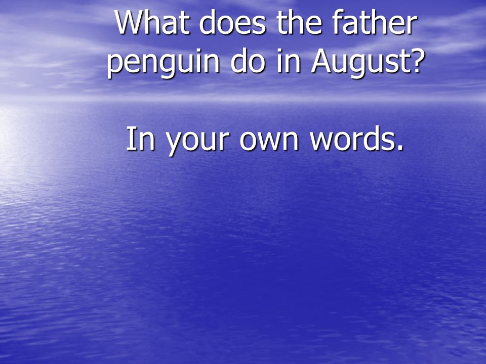 What does the father penguin do in August In your own words.