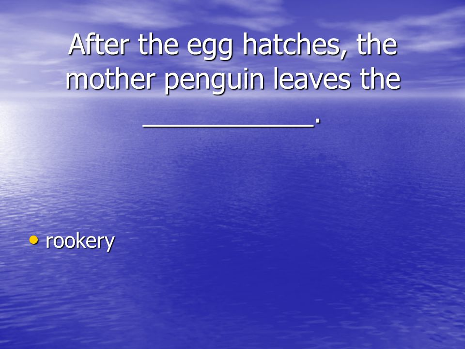 After the egg hatches, the mother penguin leaves the ___________.