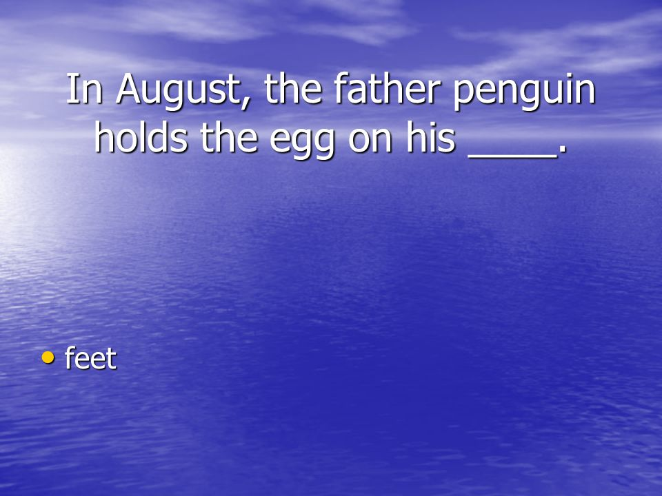 In August, the father penguin holds the egg on his ____.