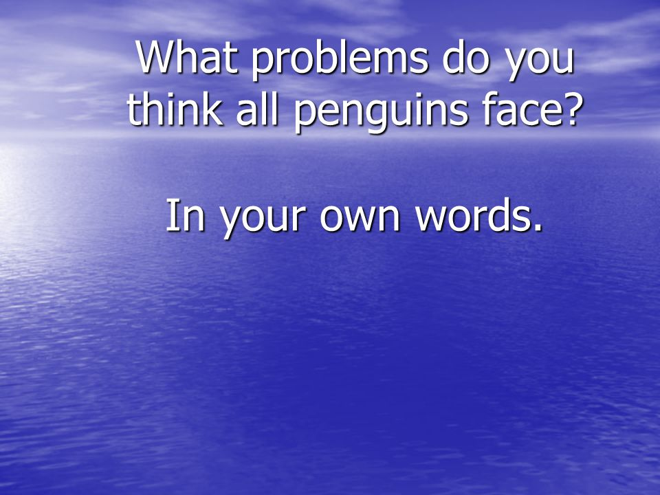 What problems do you think all penguins face In your own words.