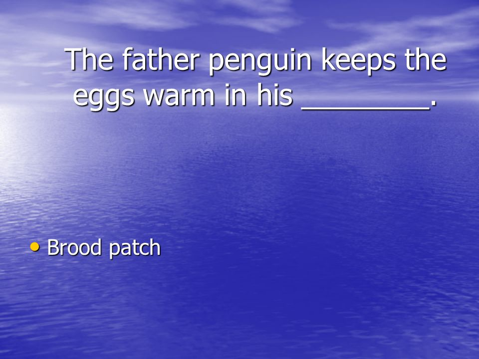 The father penguin keeps the eggs warm in his ________.