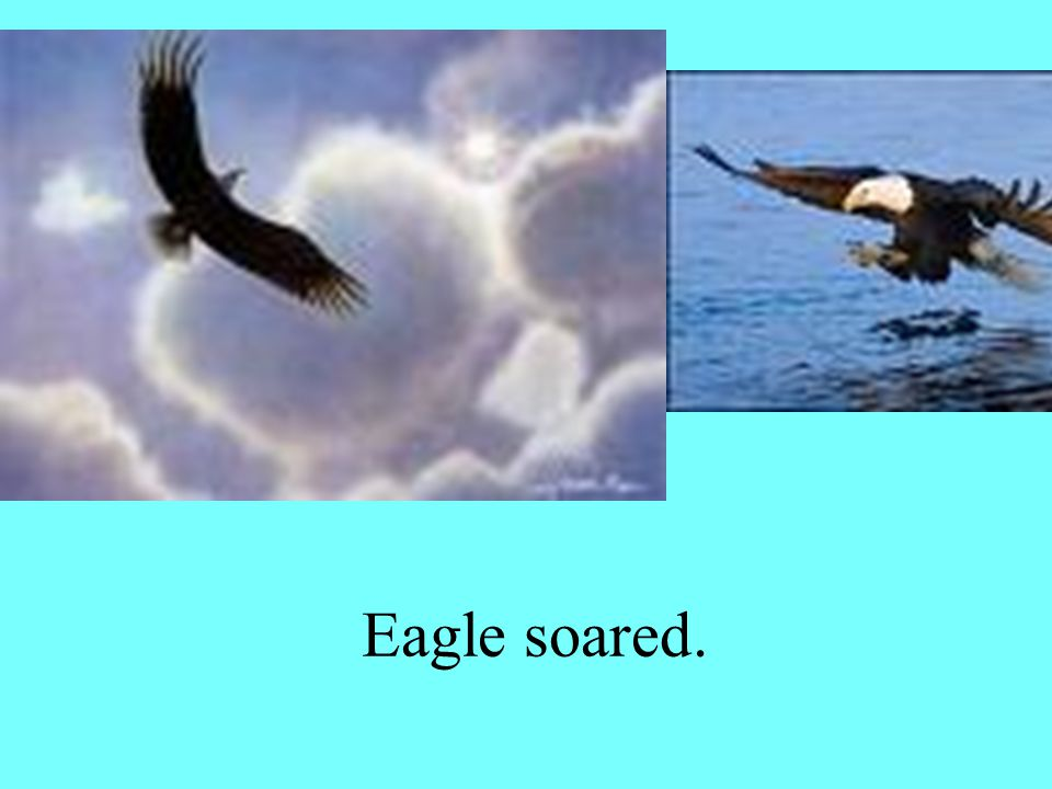 Eagle soared.