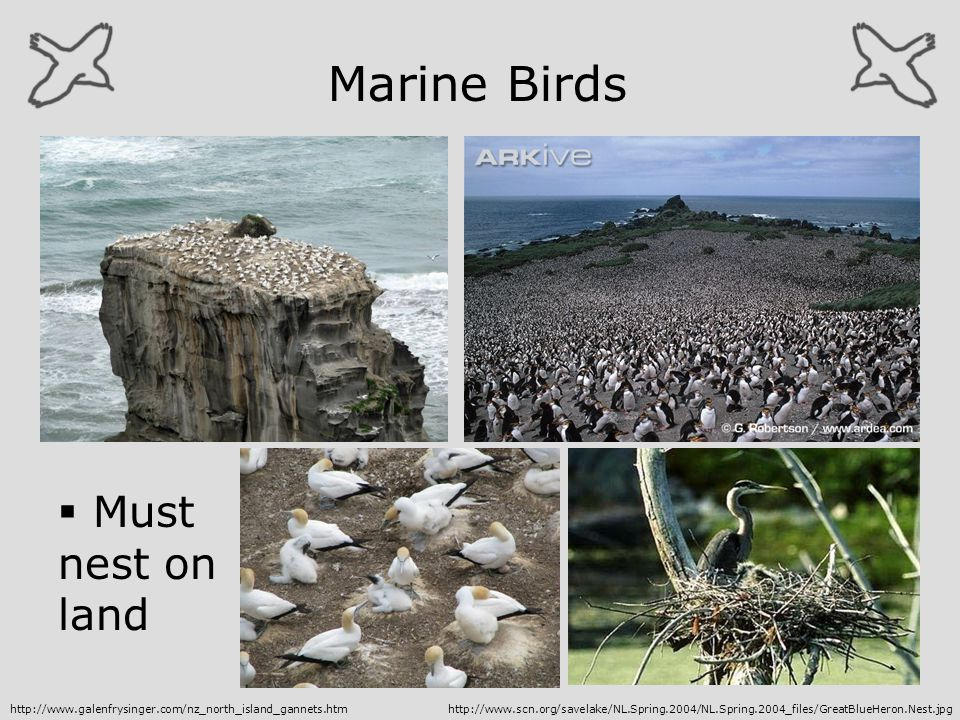 Marine Birds Must nest on land