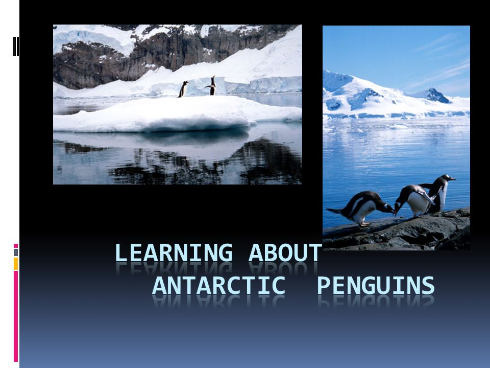 LEARNING ABOUT ANTARCTIC PENGUINS