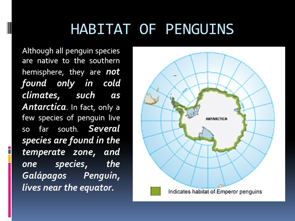 HABITAT OF PENGUINS