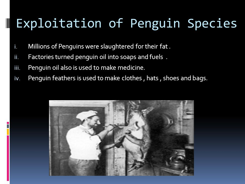 Exploitation of Penguin Species