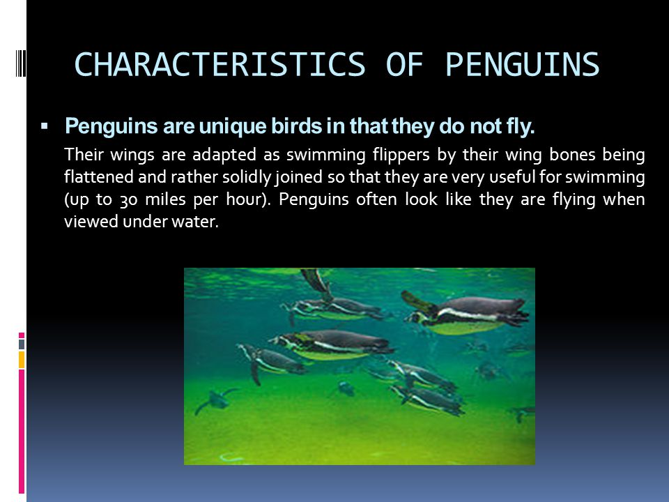 CHARACTERISTICS OF PENGUINS