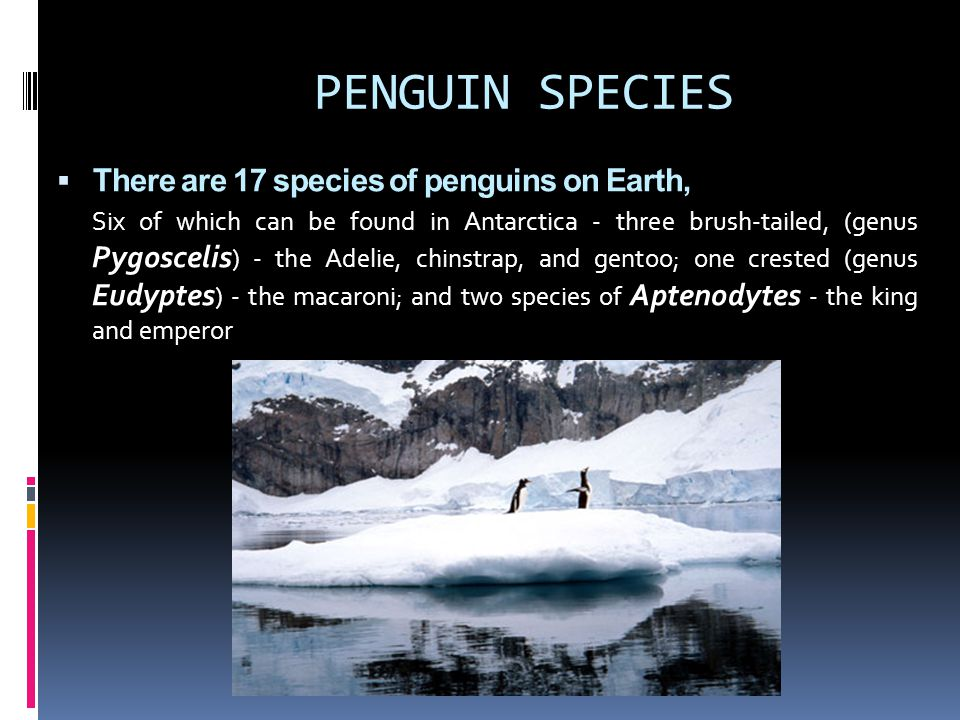 PENGUIN SPECIES There are 17 species of penguins on Earth,