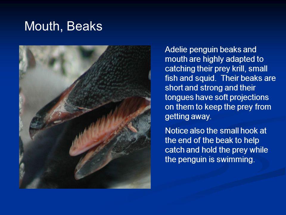 Mouth, Beaks