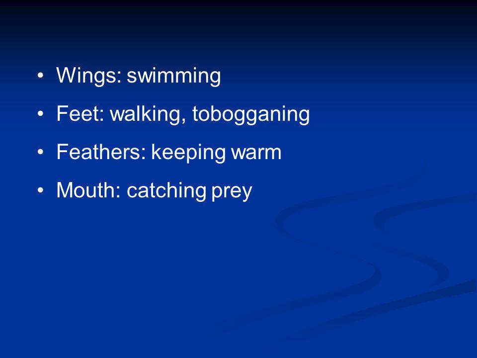 Wings: swimming Feet: walking, tobogganing Feathers: keeping warm Mouth: catching prey