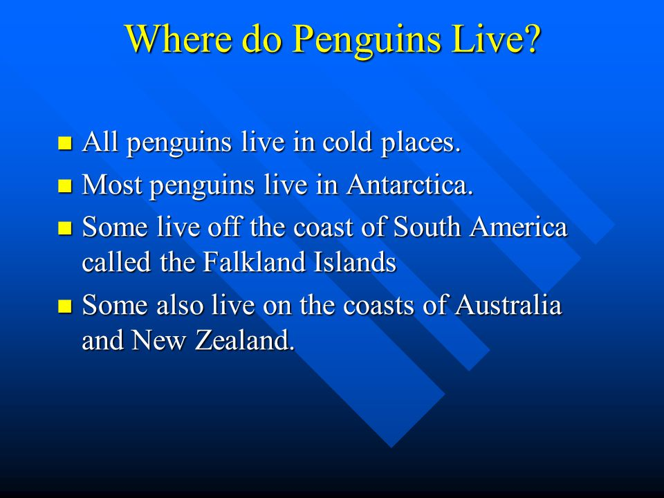 Where do Penguins Live All penguins live in cold places.
