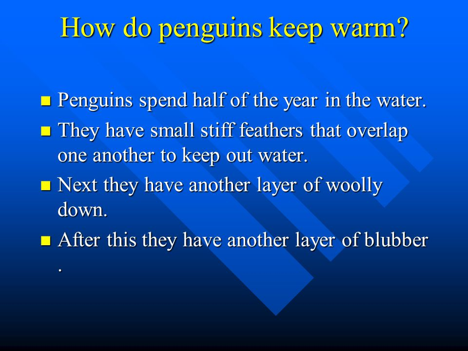How do penguins keep warm