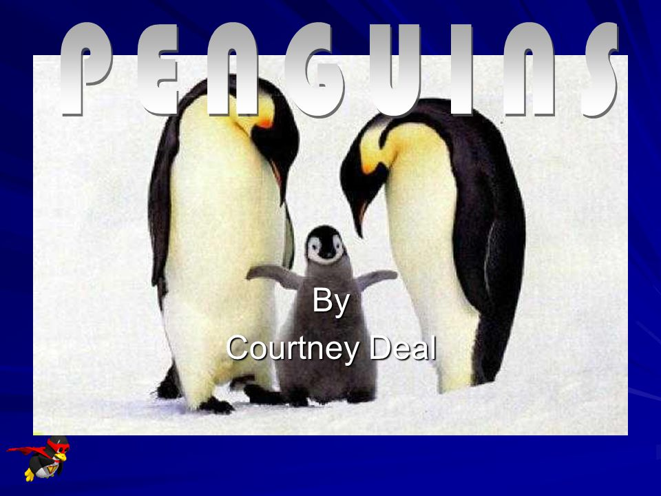PENGUINS By Courtney Deal