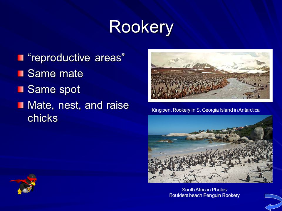 Boulders beach Penguin Rookery