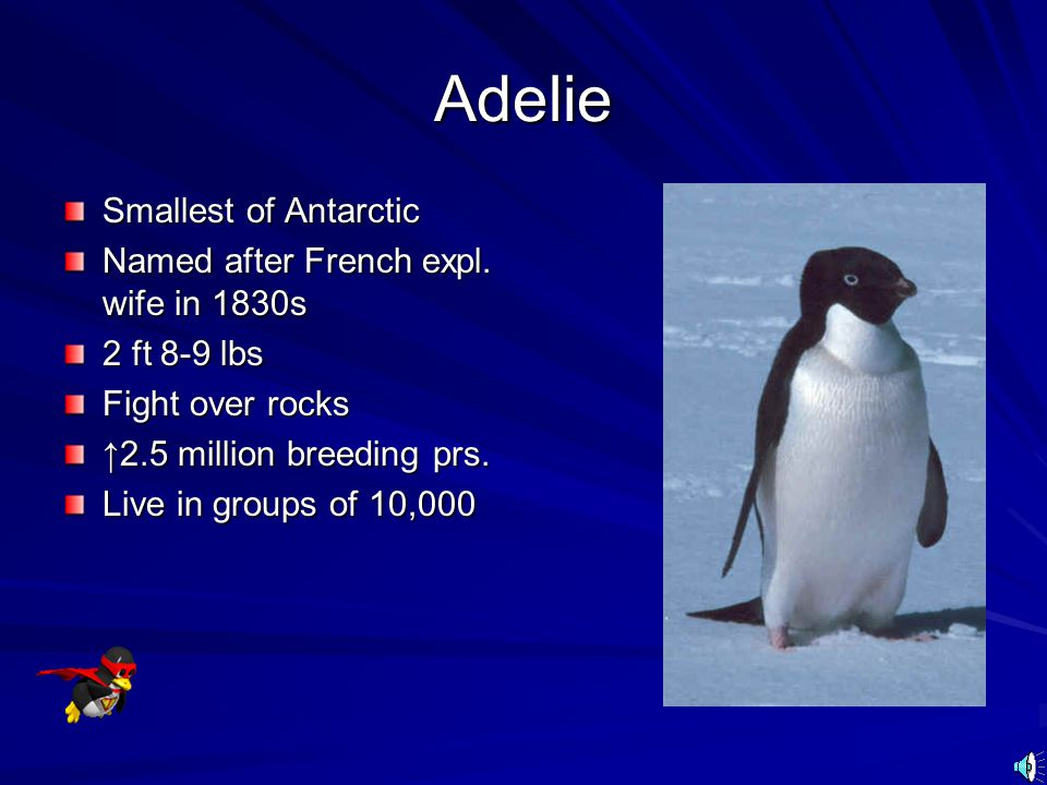 Adelie Smallest of Antarctic Named after French expl. wife in 1830s