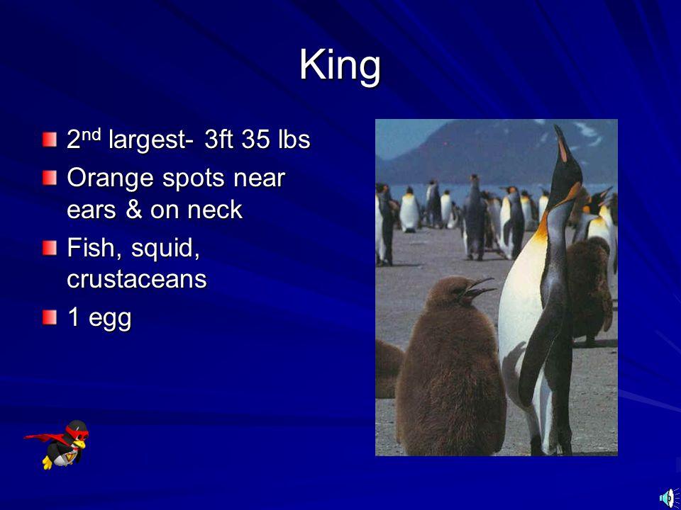 King 2nd largest- 3ft 35 lbs Orange spots near ears & on neck
