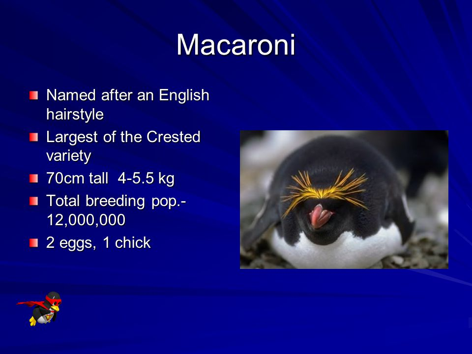 Macaroni Named after an English hairstyle