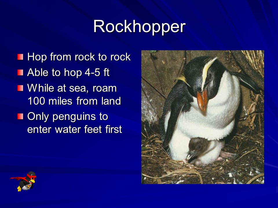 Rockhopper Hop from rock to rock Able to hop 4-5 ft