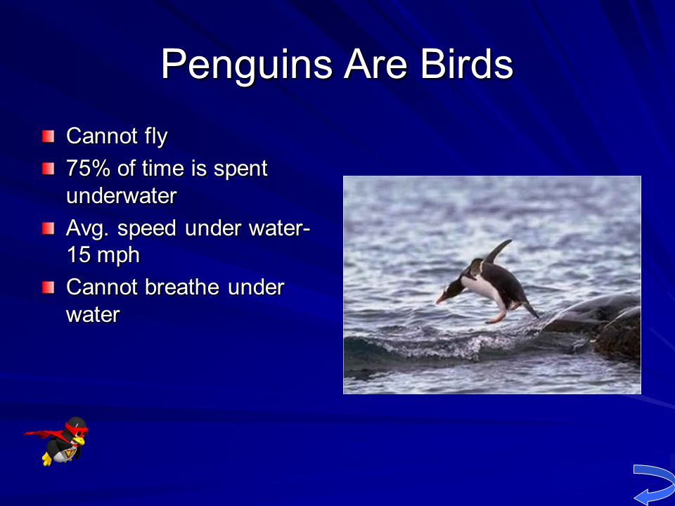 Penguins Are Birds Cannot fly 75% of time is spent underwater