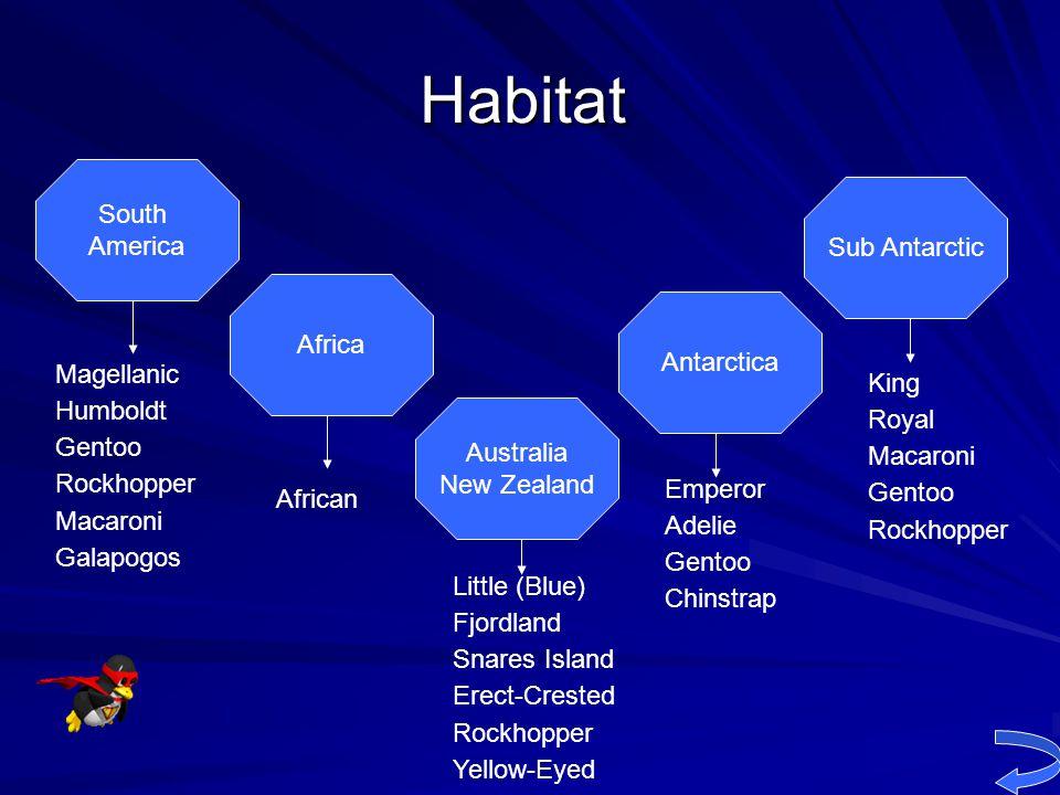 Habitat South America Sub Antarctic Africa Antarctica Magellanic