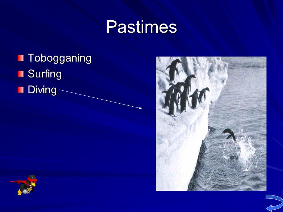 Pastimes Tobogganing Surfing Diving
