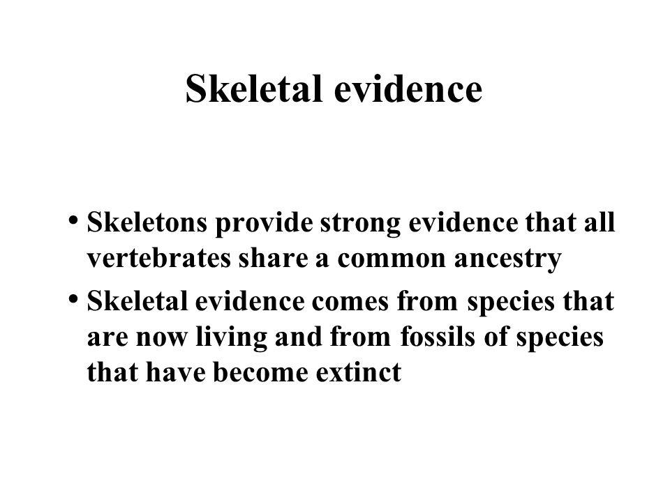 Skeletal evidence Skeletons provide strong evidence that all vertebrates share a common ancestry.