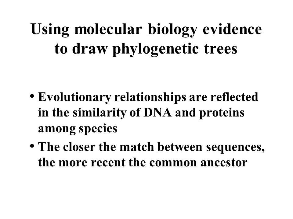 Using molecular biology evidence to draw phylogenetic trees