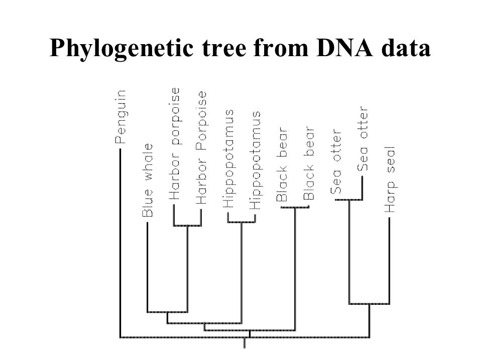 Phylogenetic tree from DNA data