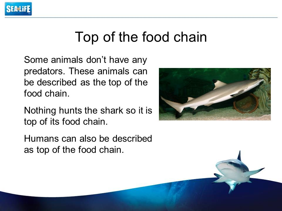 Top of the food chain Some animals don't have any predators. These animals can be described as the top of the food chain.