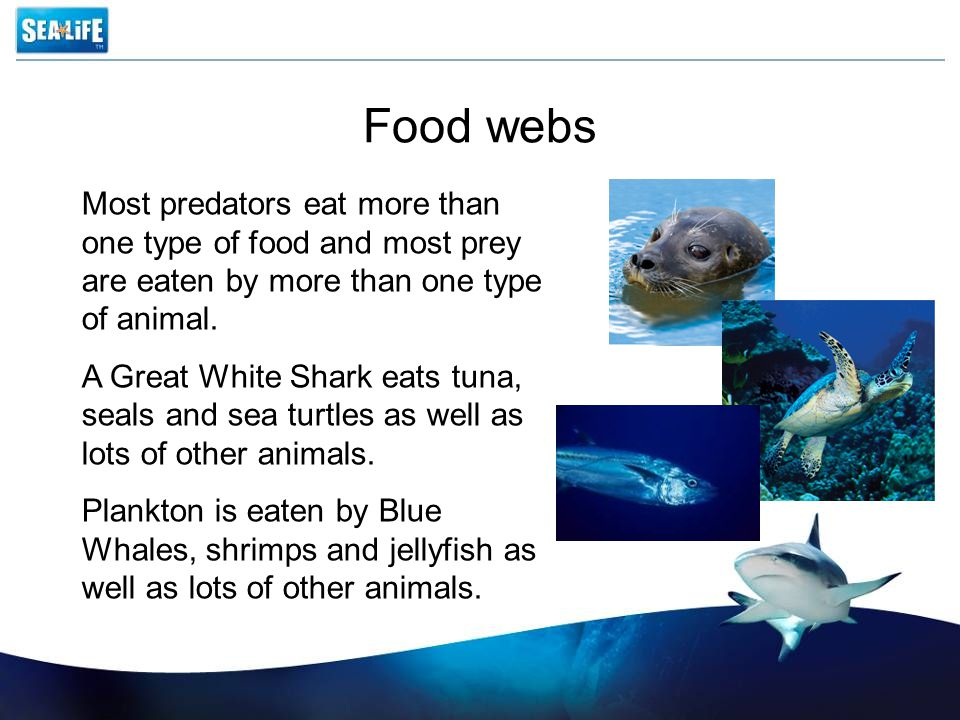 Food webs Most predators eat more than one type of food and most prey are eaten by more than one type of animal.